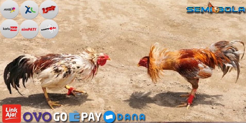 Judi Sabung Ayam Deposit Pulsa