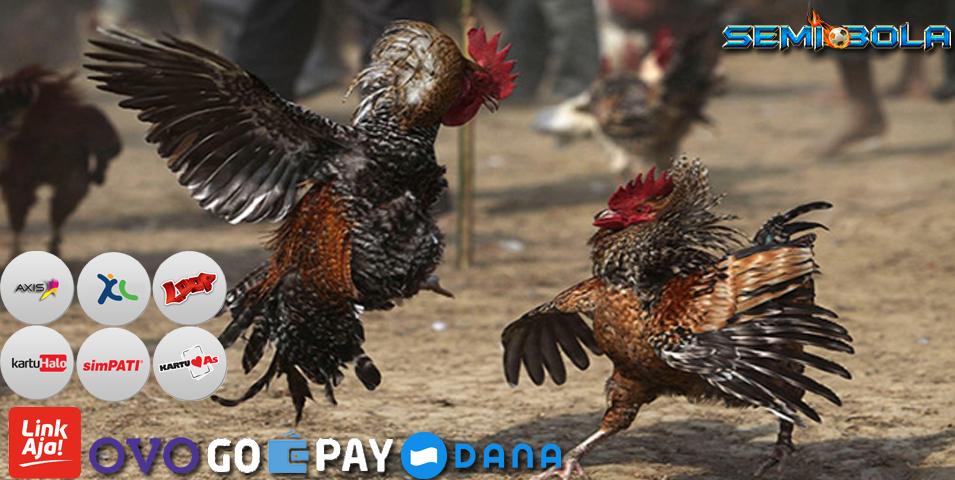 Sabung Ayam Online S128 Semi Bola